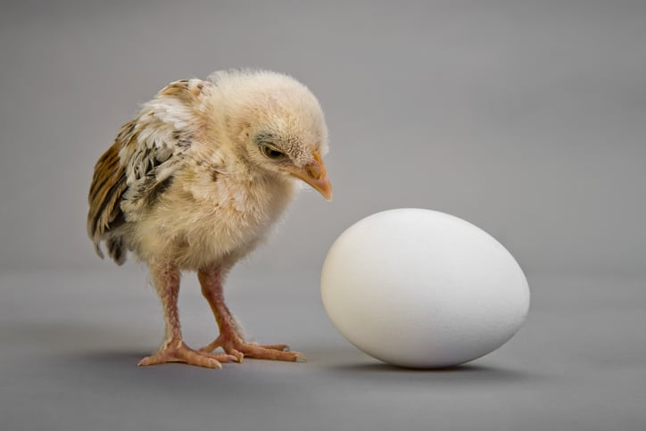 Chicken or the Egg Came First?