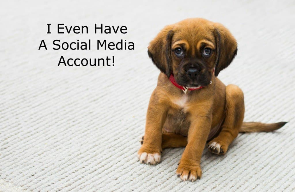 Dog has social media account